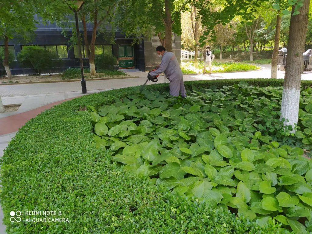 夏日绿化施工作业—北京公司