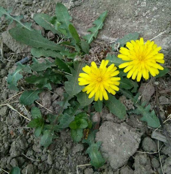 勾起童年回忆的植物