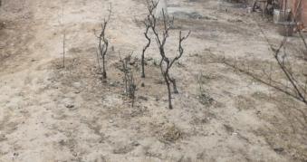 当下园林养护行业的痛点、难点分析